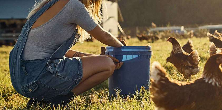 Tips for Keeping Chickens